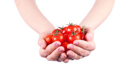 Tomatoes. Woman hand with cherry tomatoes Stock Photography
