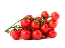 Tomatoes. On the white background stock photography