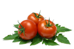 Tomatoes. Three whole Tomatoes with leaves from Tomato vine (without water droplets), isolated on white royalty free stock photo