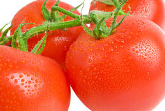 Tomatoes. Ripe tomatoes with water drops on the white background of isolation Royalty Free Stock Photo