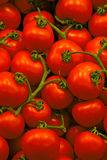 Tomatoes. Background Royalty Free Stock Photography