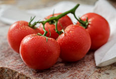 Tomatoes. A group of fresh vine ripened tomatoes royalty free stock photos