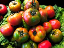 Tomatoes. Green tomatoes close up at the market Stock Image