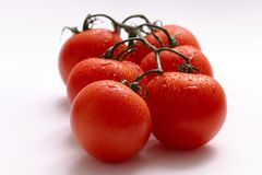 Tomatoes. On the vine Stock Photography