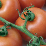 Tomatoes. Closeup of tomatoes Royalty Free Stock Photography