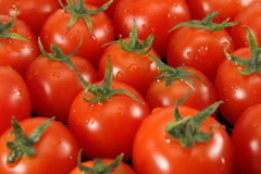 Tomatoes. Ripe red tomatoes Cherry closeup royalty free stock image