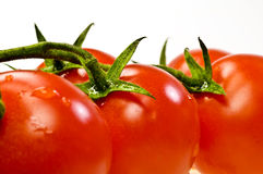 Tomatoes Stock Image