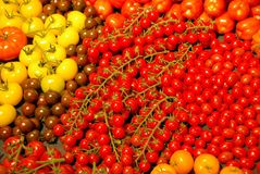 Tomatoes. A lot of red yellow, orange and dark red tomatoes Stock Photo