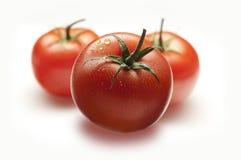 Free Tomatoes Stock Image - 49259521