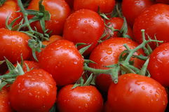 Tomatoes. Closeup