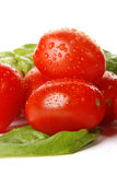 Tomatoes. Very fresh tomatoes with basil stock images