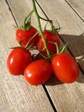 Tomatoes. Isolated fresh italian tomatoes - isolated Royalty Free Stock Photo