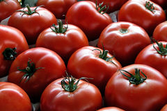 Tomatoes. Fresh red tomatoes at the market royalty free stock image