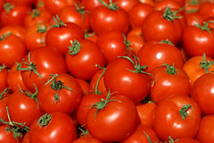 Tomatoes. Red Tomatoes Royalty Free Stock Photography