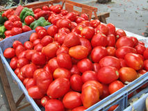 Tomatoes stock photos