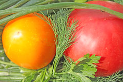 Tomatoes. Close up of yellow and red tomato Stock Image