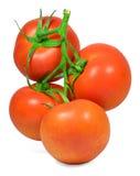 tomatoes Στοκ εικόνες με δικαίωμα ελεύθερης χρήσης
