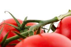 Tomatoes. Red tomatoes isolated on a white background Stock Images