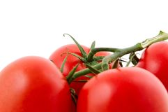 Tomatoes. Red tomatoes isolated on a white background Royalty Free Stock Photos