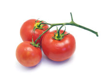 Tomatoes. Fresh ripe tomatoes on white background Royalty Free Stock Image