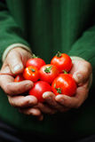 Tomatoes. In hands of the old person Royalty Free Stock Images