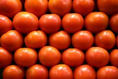 Tomatoes. Stack of fresh ripe tomatoes royalty free stock images