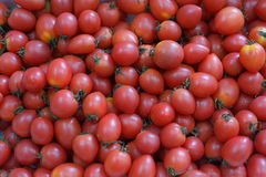 Tomatoes. Aka cherry tomato vine tomatoes, small tomatoes, cherry tomatoes, pearl tomatoes, in a foreign country has little golden fruit, love fruit. It is both Stock Photo