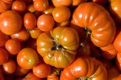 Tomatoes All Shapes And Sizes. Tomatoes, all shapes and sizes, fresh from the Italian garden royalty free stock image
