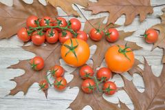 Tomatoes on the autumn leaves on a wooden table Royalty Free Stock Images