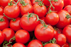 Tomatoes background Stock Photography