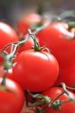 Tomatoes background Stock Image
