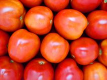 tomatoes background Stock Images