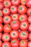 Tomatoes Stock Photography