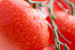 Tomatoes background texture Stock Images