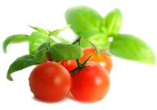Tomatoes and basil. On white background Stock Photo