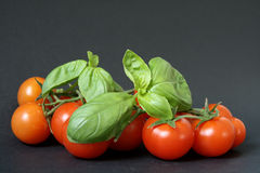 Tomatoes and basil. Fresh tomatoes and green basil leafs on black background Stock Photo