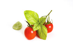 Tomatoes and basil Royalty Free Stock Photo