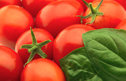 Tomatoes and a basil Stock Photo