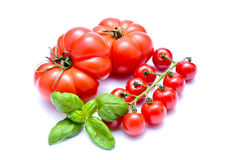 Tomatoes and basil Royalty Free Stock Images