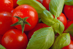 Tomatoes and basil Royalty Free Stock Image
