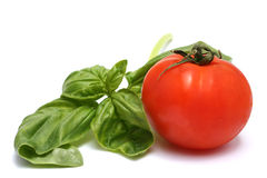 Tomatoes and Basil. Isolated against a white background Royalty Free Stock Photography