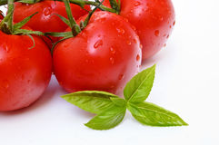 Tomatoes and basil. On white background. Closeup Stock Images