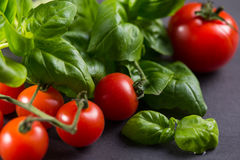 Tomatoes and basil on black Stock Photography