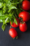 Tomatoes and Basil on a black background. Fresh tomatoes and Basil on a black background royalty free stock images