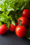 Tomatoes and Basil closeup. Tomatoes and fresh basil closeup stock photography