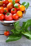 Tomatoes and basil in a colander Royalty Free Stock Photo