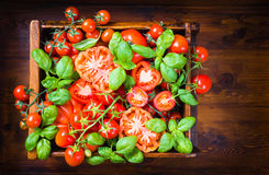 Tomatoes and basil food background. Royalty Free Stock Photography