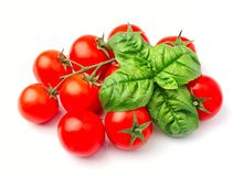 Tomatoes and basil herbs stock photos