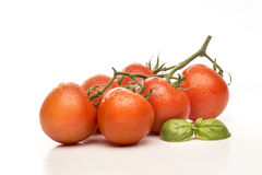 Tomatoes and basil Royalty Free Stock Photo