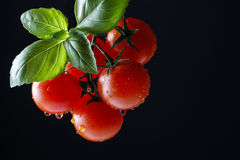 Tomatoes and basil leaf on black background Royalty Free Stock Images